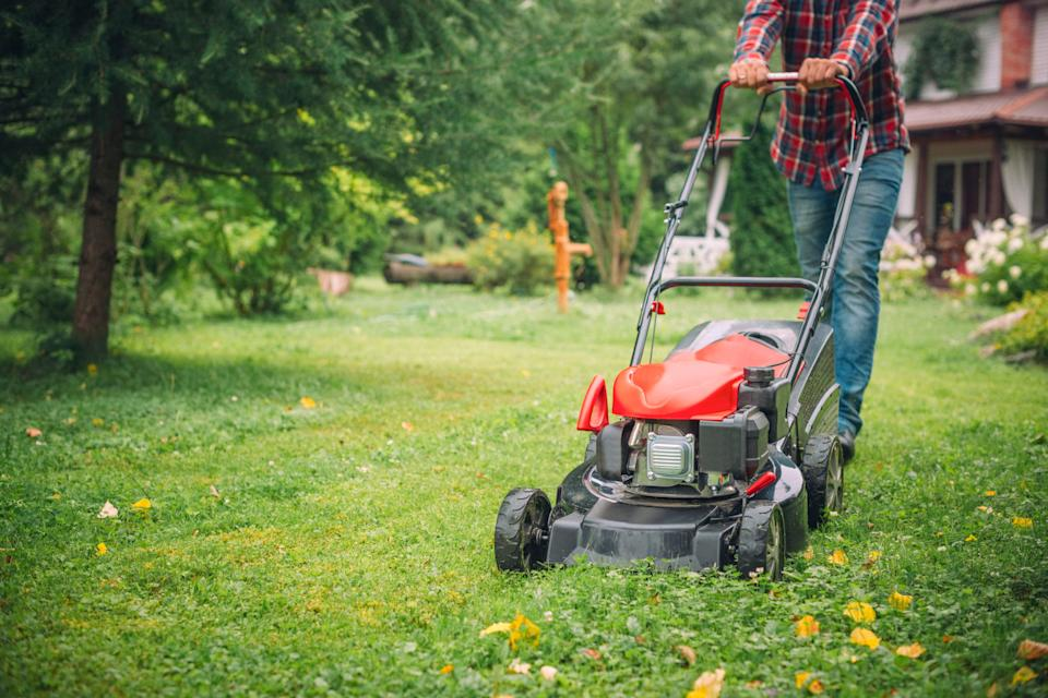 Lawns are starting to grow again, so it's time to find the best picks to clip grass.