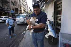 Lebanon, Beirut | Aug. 2020 | Rapid response and emergency help after explosion at the harbour in Beirut. #SupportBeirutAnimals © FOUR PAWS
