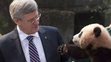 Prime Minister Stephen Harper was in Toronto on Monday to meet two giant panda bears on their arrival from China