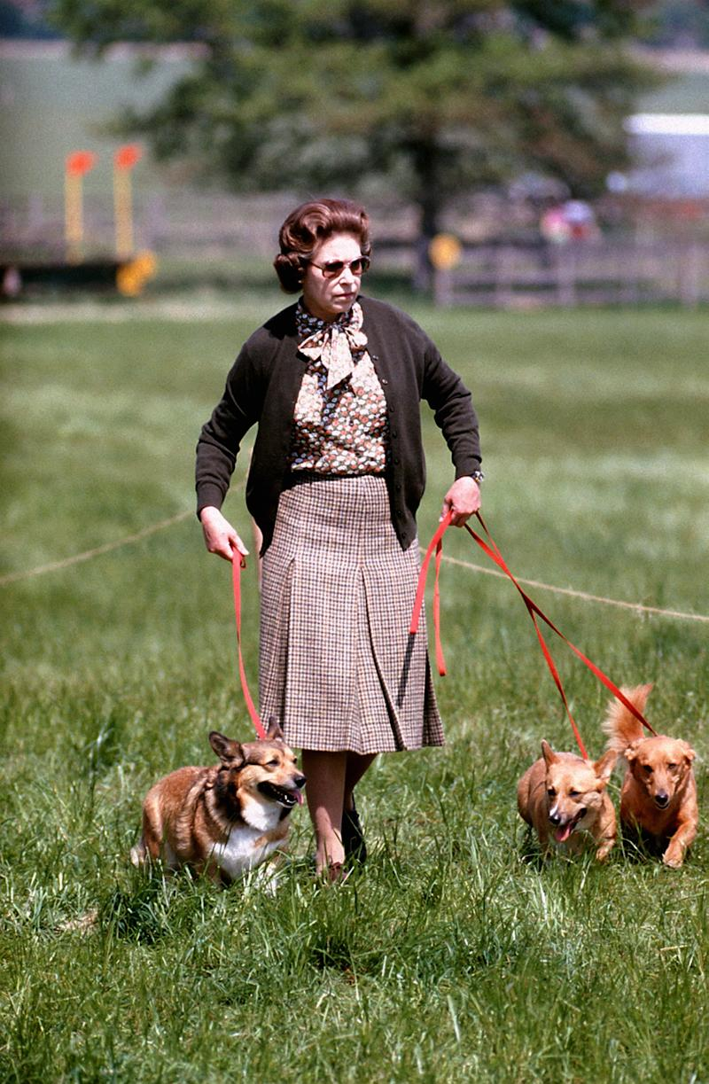 Queen Elizabeth II walking the Cross Country course with some of her corgis during the second day of the Windsor Horse Trials, 1980.