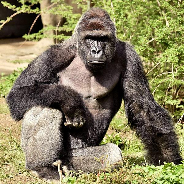 Mom of 4-Year-Old Who Climbed into Zoo Pen Defends Herself from Backlash After Zookeepers Killed Gorilla| Zoo Animals