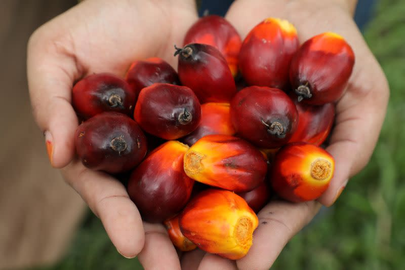Indonesia to revamp palm oil levy to support biodiesel programme