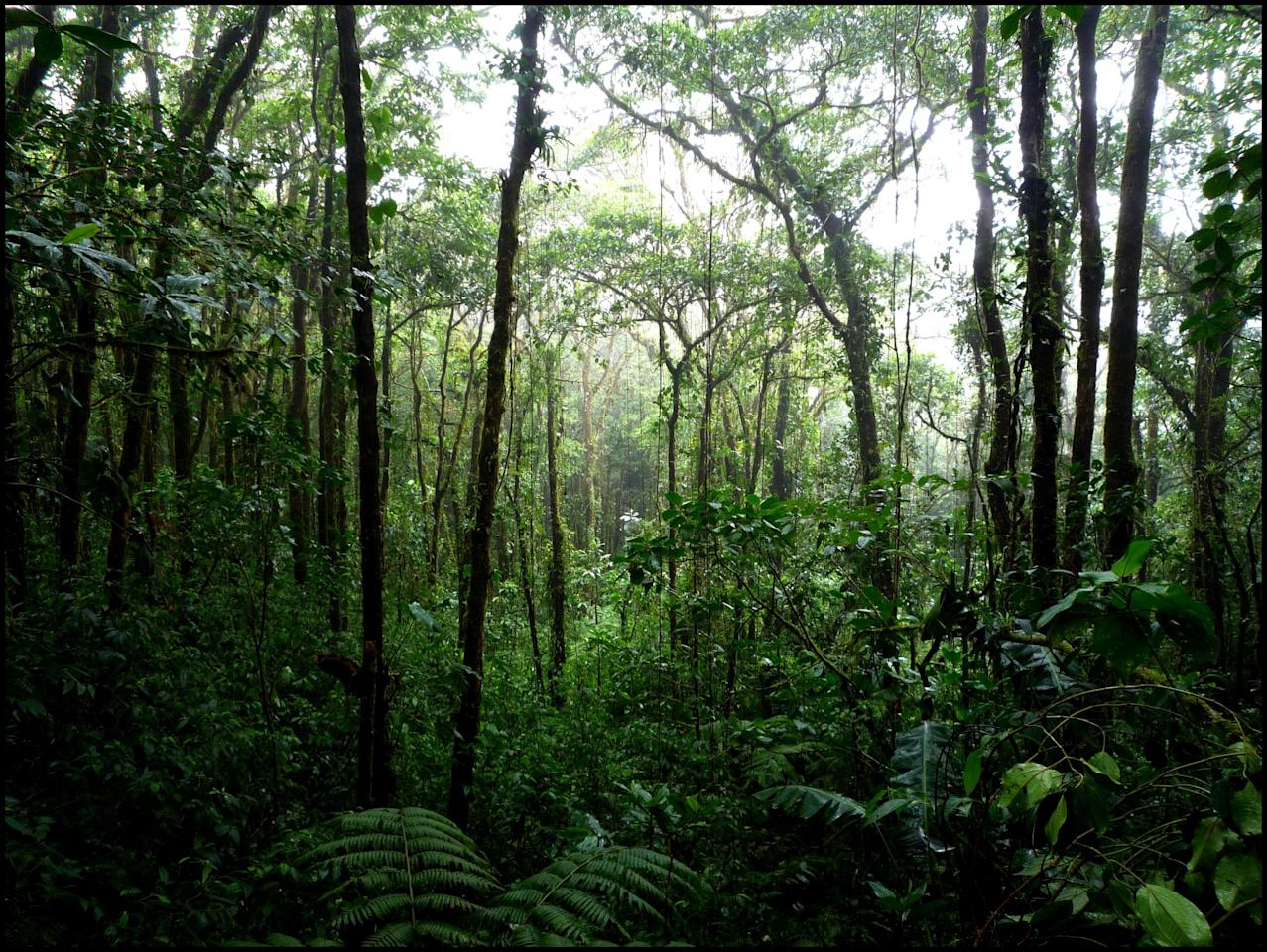 "<p>Is there anywhere more exotic-feeling than the heart of a rainforest? (Victoria Reay/<a rel=""nofollow"" href=""https://www.flickr.com/photos/vkreay/4132244038/"">Flickr)</a> </p>"