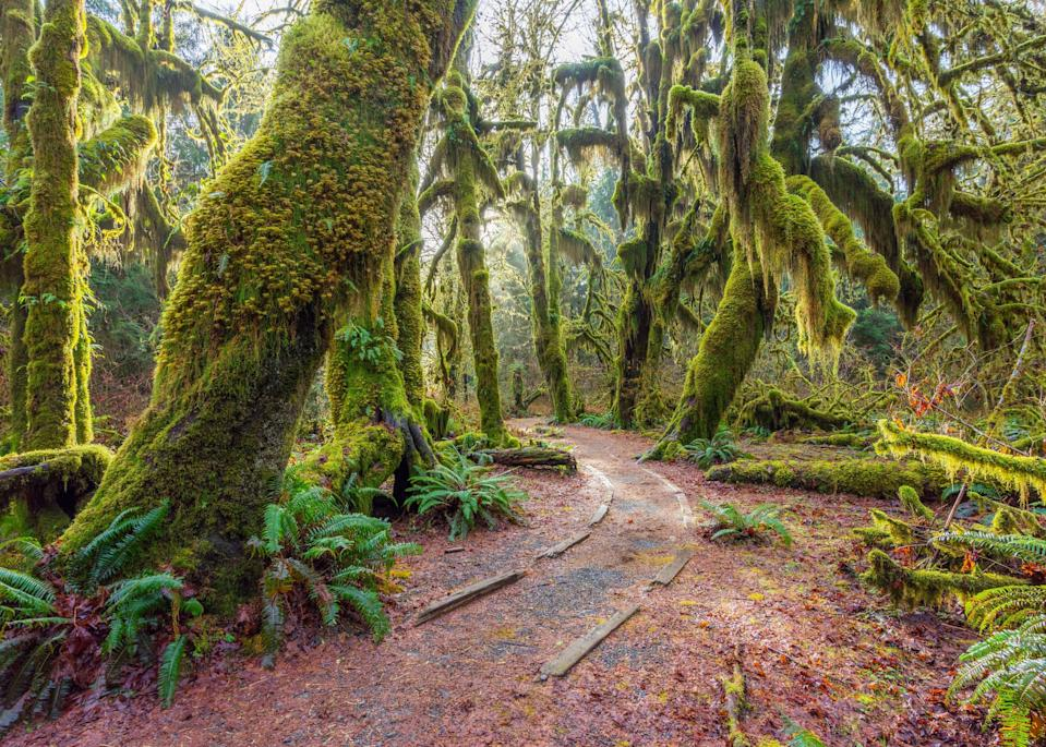 """<p><strong>Best camping in Washington:</strong> Hoh Campground, <a href=""""https://www.cntraveler.com/story/why-quiet-is-so-important-in-travel?mbid=synd_yahoo_rss"""" rel=""""nofollow noopener"""" target=""""_blank"""" data-ylk=""""slk:Olympic National Park"""" class=""""link rapid-noclick-resp"""">Olympic National Park</a> </p> <p>Sleep among moss-blanketed spruce, hemlock, and Douglas fir in one of the only temperate rainforests in the country. The first-come, first-served Hoh Campground allows travelers to spend the night right in the middle of the dense greenery. During the day, stroll along the 0.8-mile Hall of Mosses loop, and keep an eye out for bright yellow banana slugs.</p>"""