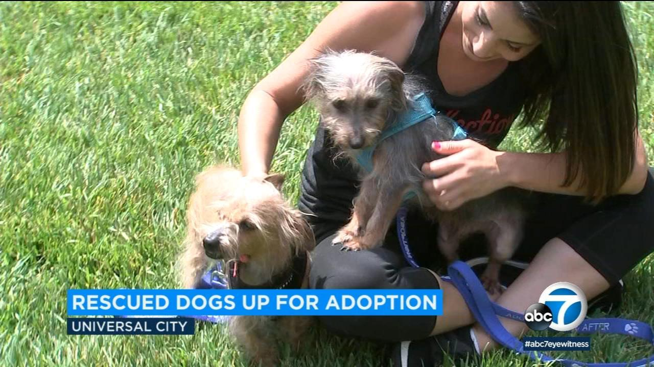 Dogs Rescued From Squalor In Coachella