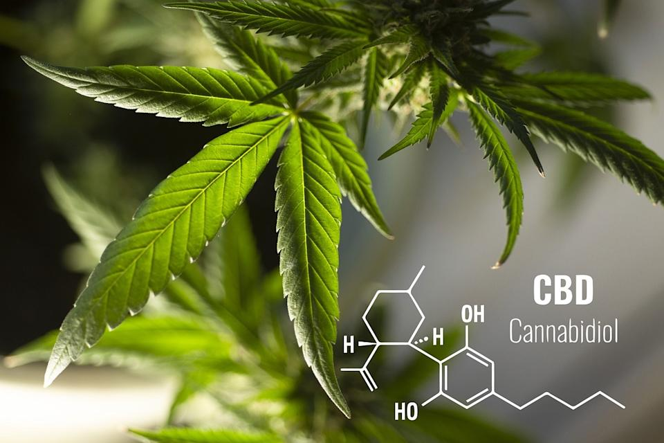 The most understood cannabinoids found in a cannabis plant are Cannabidiol (CBD) and Tetrahydrocannabidiol (THC)
