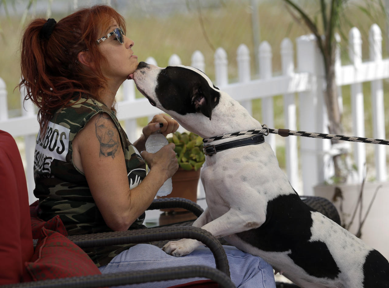 """In this Oct. 10, 2013, photo, Tia Maria Torres, star of Animal Planet's """"Pit Bulls and Parolees,"""" is licked by a pit bull during the filming of an episode of the show's fifth season in New Orleans. Torres, who runs the nation's largest pit bull rescue center and has long paired abused and abandoned dogs with the parolees who care for them, has moved her long-running reality TV series from southern California to New Orleans, where hurricanes and overbreeding have left many pit bulls abandoned or abused. (AP Photo/Gerald Herbert)"""
