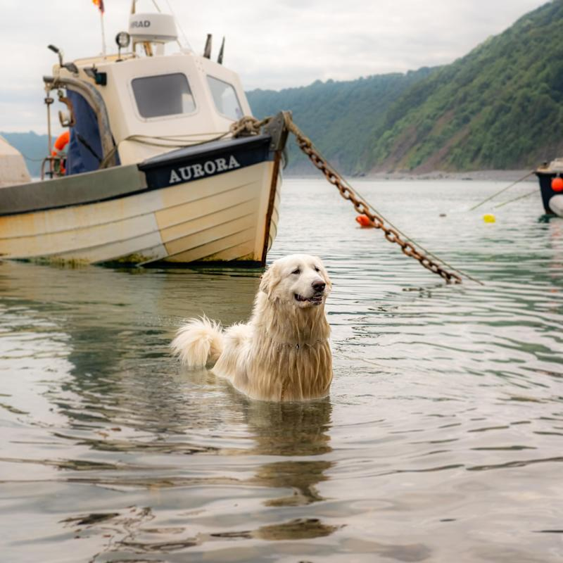 Daft dog poses in lake in front of boat - MARTIN COUPE