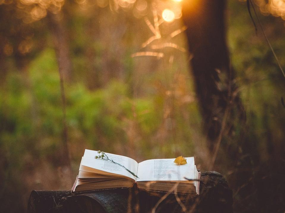 A serene stock pic of a book lying on a log near some trees (Getty)