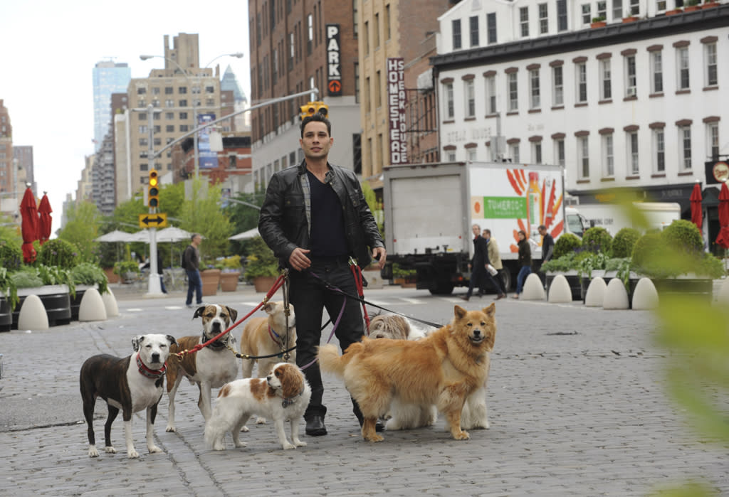 "The new reality series, ""Dogs in the City"" starring New York City dog guru Justin Silver, a master at resolving issues between canines and their owners, no matter whose behavior is at fault."