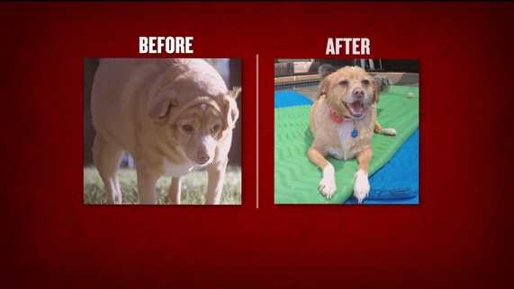 A before and after of one of the dogs featured on the show. (Photo: Animal Planet)