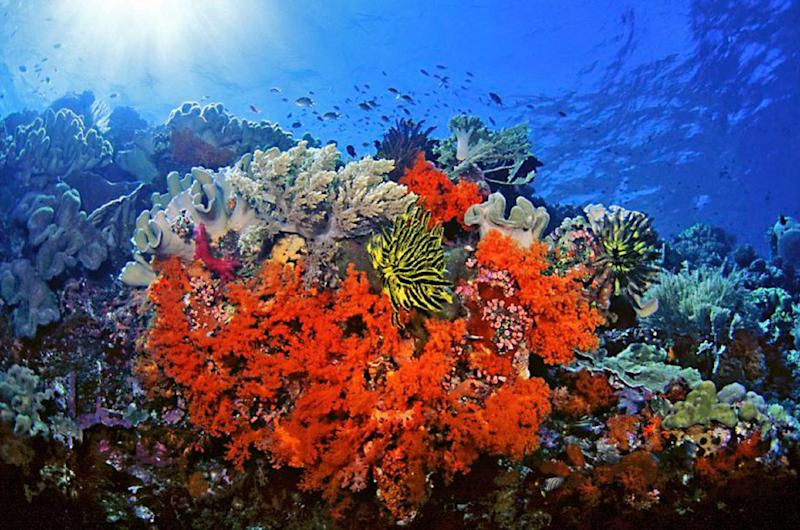 This undated handout photo provided by Marinelifephotography.com shows Soft corals, crinoids and associated reef fishes in Southeast Sulawesi, Indonesia. A new study on the timing of climate change calculates the probable dates for when cities and ecosystems across the world would regularly experience never-before-seen hotter environments based on about 150 years of record-keeping. These are the dates when every year is hotter than old hottest annual record. This means the old blistering heat of people's memories will eventually seem unusually cool in comparison to the warming years to come. Coral reef species are the first to be stuck in a new climate that they haven't experienced before and are most vulnerable to climate change, Mora said. Coral reefs will be in that new regime around 2030. (AP Photo/Keoki Stender, Marinelifephotography.com)