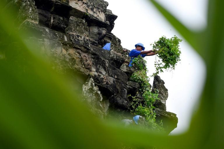 A gardener removing tree saplings from the exterior of the Angkor Wat temple in Cambodia as part of an ongoing preservation battle