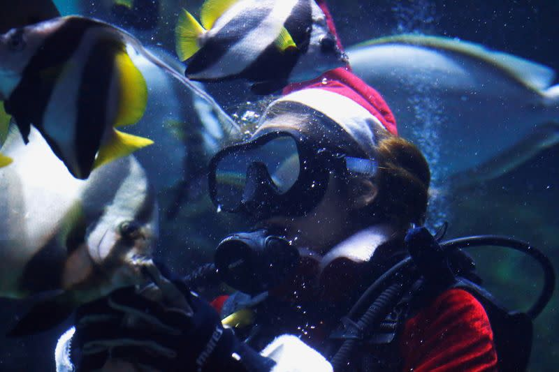 FILE PHOTO: A diver dressed as Santa Claus dives at Sea Life aquarium in Bangkok