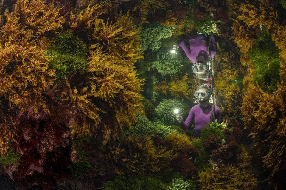 Reflections by Justin Gilligan, which won the Wildlife Photographer of the Year: Plants and Fungi Award (Justin Gilligan/Wildlife Photographer of the Year/PA) (PA Wire)