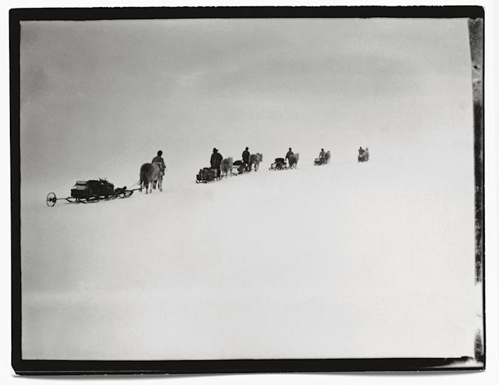 """Ponies on the march, Great Ice Barrier, 2 December, 1911.<br><br>(Photo credit: ©2011 Richard Kossow)<br><br>For more information on """"The Lost Photographs of Captain Scott"""" and where to buy the book, visit <a href=""""http://www.hachettebookgroup.com/books_9780316178501.htm"""" rel=""""nofollow noopener"""" target=""""_blank"""" data-ylk=""""slk:hachettebookgroup.com"""" class=""""link rapid-noclick-resp"""">hachettebookgroup.com</a>"""