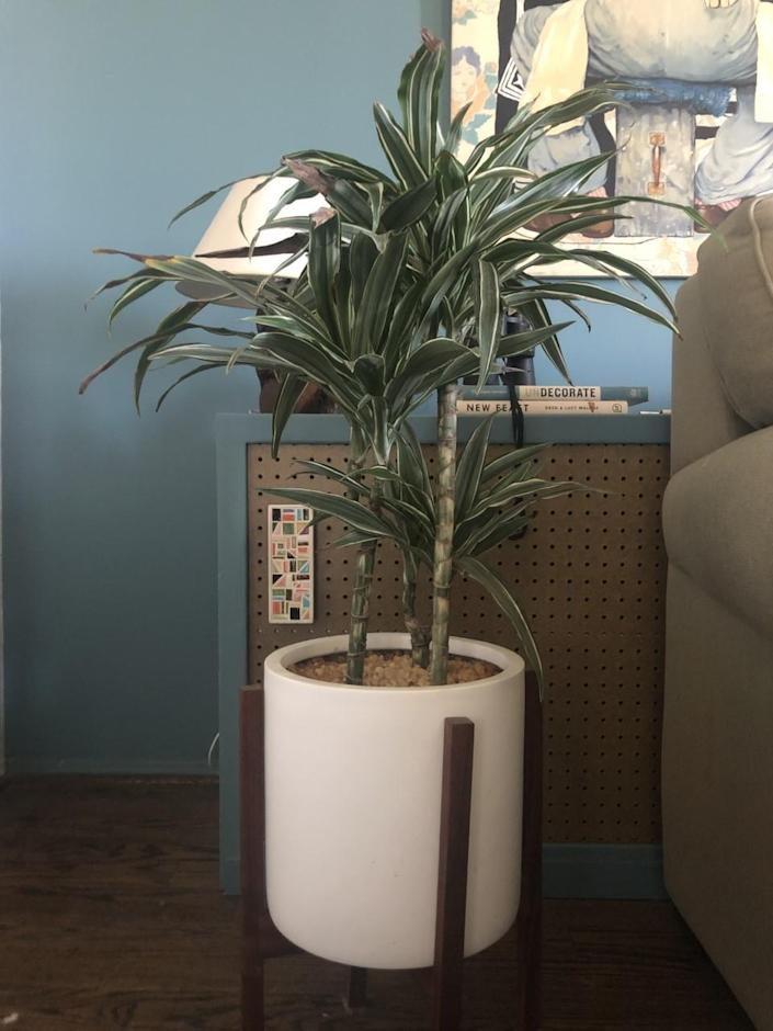 A plant in a white pot next to a couch.