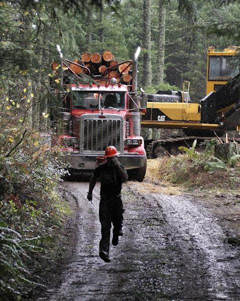 "FILE - In this Nov. 30, 2012, file photo, logger Eric Davis runs down the road as a truck loaded with logs is readied in the forest near Banks, Ore. While the looming fiscal cliff dominates political conversation in Washington, some Republicans and business groups see signs of a ""regulatory cliff"" they say could be just as damaging to the economy. In recent weeks, the Environmental Protection Agency has proposed rules to scale back mercury emission limits for new power plants and deal with runoff from logging roads. (AP Photo/Don Ryan, File)"