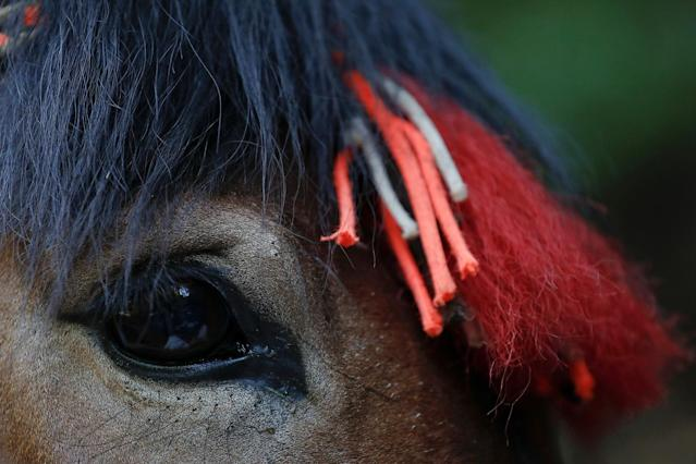 "<p>A mule decorated with red tassels carries bricks and other construction materials up the steep path towards the Jiankou section of the Great Wall, located in Huairou District, north of Beijing, China, June 7, 2017. ""The path is too steep and the mountains are too high, so bricks can only be transported by mules,"" said local mule owner Cao Xinhua. (Photo: Damir Sagolj/Reuters) </p>"