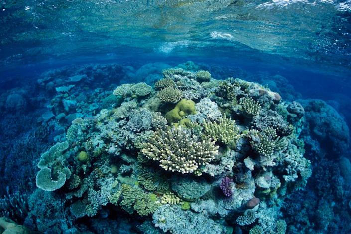 """Great Barrier Reef, north-east of Port Douglas, Queensland, Australia, Western Pacific Ocean Coral, mostly of the genus Acropora.<span class=""""copyright"""">Francois Gohier—VWPics/Universal Images Group/Getting Images</span>"""