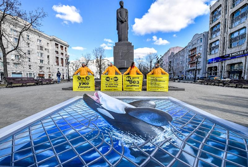 "Activists in Moscow last week campaigned against orcas and belugas being crammed into a facility dubbed a ""whale jail"" in the Russian Far East (AFP Photo/Yuri KADOBNOV)"