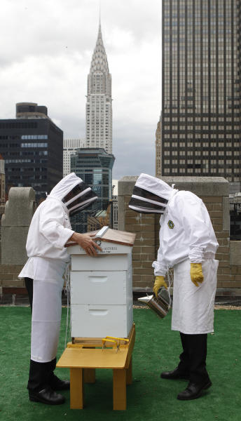 Waldorf=Astoria hotel sous chef Josh Bierman, left, and culinary director David Garcelon wear bee suits over their chef's uniforms as they inspect the hotel's bee hives on the 20th floor roof of the renowned hotel in New York, Tuesday, June 5, 2012. The hotel plans to harvest its own honey and help pollinate plants in the skyscraper-heavy heart of the city, joining a mini beekeeping boom that has taken over hotel rooftops from Paris to Times Square. (AP Photo/Kathy Willens)