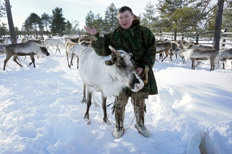 Stepan Sopochin speaks during an AFP interview amidst his reindeer herd outside Kogalym in the Siberian Khanty-Mansi region