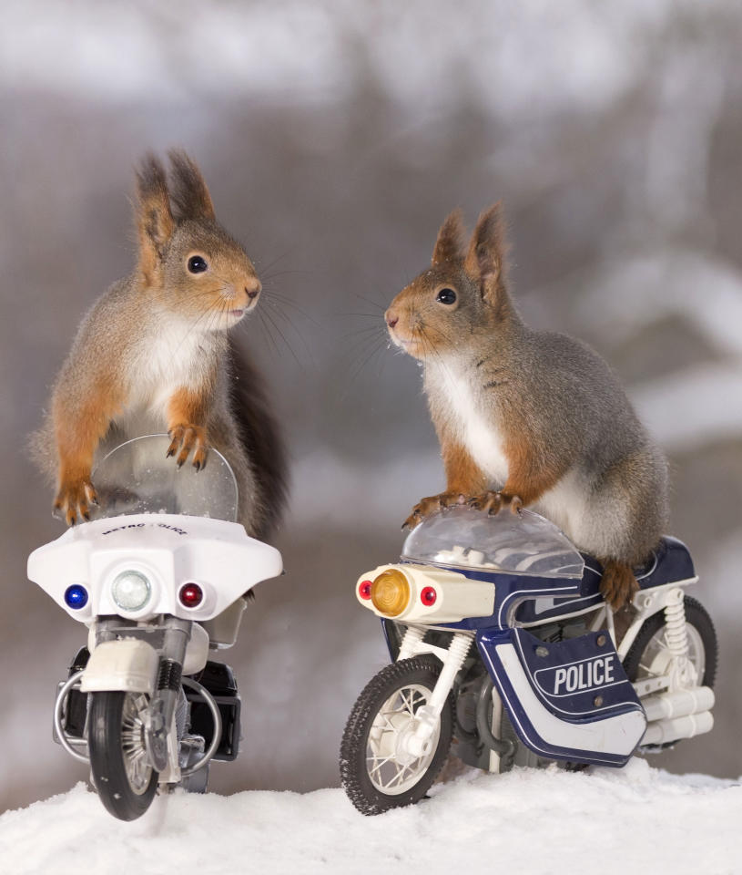 <p>These squirrels are going nuts for bikes. (Photo: Geert Weggen/Caters News) </p>