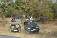 Around 550,000 people visit Gir National Park each year