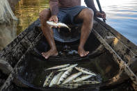 A fisherman shows his catch from the Tapajos river in Alter do Chao, district of Santarem, Para state, Brazil, Thursday, Aug. 27, 2020. Fishermen say they can no longer depend on the river to support their families, as its currently stormy waters scare much of the fish away. They blame that on cargo ships and ferries routed to the Santarém port, which takes Brazil's soybeans, beef and corn abroad. (AP Photo/Andre Penner)