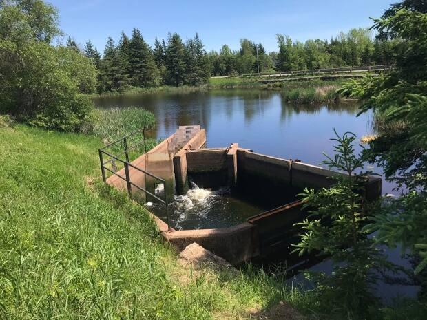 Salt and fresh water are able to mix because of the fish ladder, said Duffy. That can lead to a buildup of algae that creates a strong odour as it becomes anoxic, in a process that can harm fish and other wildlife.