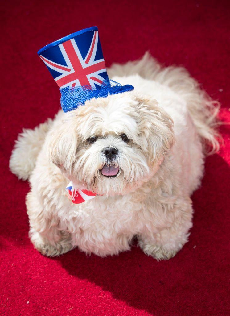 <p>The Lhasa Apso is a 1,000-year-old breed. These elegant pups were originally bred to serve as sentinels at palaces and monasteries in the Himalayas. Now they're often known as the comedians of their homes!<strong><strong><br></strong></strong></p><p><strong>Weight: 12-18 pounds</strong></p>