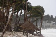 Palm trees are buffeted by the winds of Hurricane Zeta in Playa del Carmen, Mexico, early Tuesday, Oct. 27, 2020. Zeta is leaving Mexico's Yucatan Peninsula on a path that could hit New Orleans Wednesday night. (AP Photo/Tomas Stargardter)