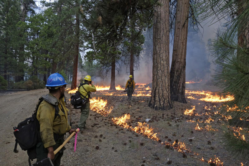 In this June 11, 2019 photo, firefighter Andrew Pettit, right, walks among the flames in Cedar Grove as fire ecologist Tony Caprio, center, take a photo and firefighter Julio Campos looks on during a prescribed fire in Kings Canyon National Park, Calif. The prescribed burn, a low-intensity, closely managed fire, was intended to clear out undergrowth and protect the heart of Kings Canyon National Park from a future threatening wildfire. The tactic is considered one of the best ways to prevent the kind of catastrophic destruction that has become common, but its use falls woefully short of goals in the West. (AP Photo/Brian Melley)