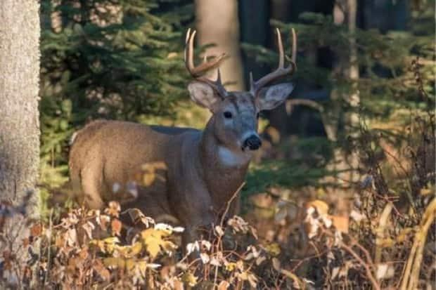 The Wildlife Regulations Amendment Act, 2021 provides greater access to motorized equipment for hunters with physical disabilities according to Environment Minister Warren Kaeding.  (Government of Saskatchewan - image credit)