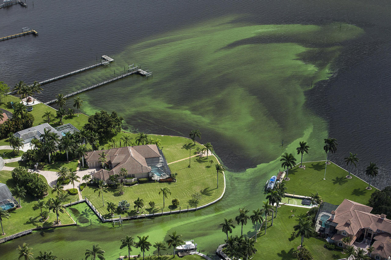 <p>St. Lucie River, Florida. (Photo: Greg Lovett/The Palm Beach Post via AP) </p>