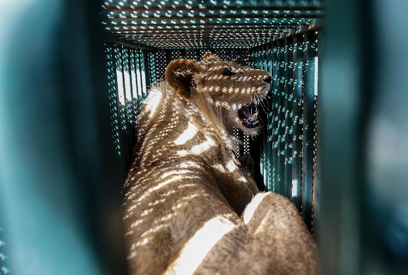 Four Paws' organisation rescues neglected animals at Gaza zoo