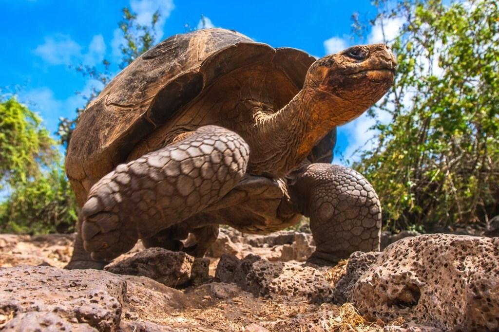 """Okay, technically she wasn't his pet, but after his tour of the Galapagos Islands, Charles Darwin brought back a five-year-old tortoise he named Harriet. She outlived her adopter by 124 years, ultimately making it to a whopping 176 years old. Harriet livedout her final years as part of the family of Steve """"Crocodile Hunter"""" Irwin in Australia, until she passed away, in 2006. And for fascinating info straight from the animal kingdom, don't miss the<a href=""""https://bestlifeonline.com/animal-facts/?utm_source=yahoo-news&utm_medium=feed&utm_campaign=yahoo-feed"""" target=""""_blank"""">50 Most Amazing Animal Facts</a>!"""
