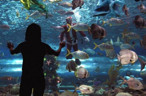 A visitor views the inside of an aquarium tank in Manila