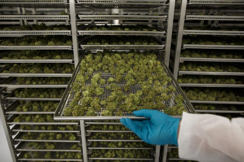 Imperial Brands Is Latest Tobacco Company to Look at Pot