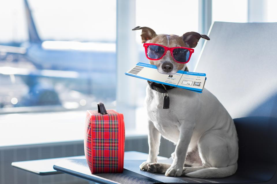 The rules have changed slightly for taking pets on holiday. (Getty Images)