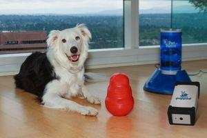 PupPod's Kickstarter: World's First Self-Learning Platform for Dogs Features Modified KONG Toy, Wireless Treat Dispenser and Live Streaming Video