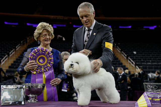 Flynn, a bichon frise and winner of Best In Show, handler Bill McFadden and judge Betty-Anne Stenmark pose together winning the 142nd Westminster Kennel Club Dog Show in New York, U.S., February 14, 2018. REUTERS/Brendan McDermid