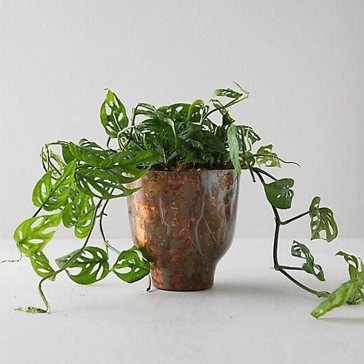"""<h2>Terrain Swiss Cheese Plant in Copper Pot</h2><br>Not only is she your mom — she's also a top-notch plant mom, and is always happy to take another moment of greenery under her wing. This trailing swiss cheese plant is just kooky enough for her — and the ever-so-slightly patina-ed copper pot will fit right in with her eclectic decor. (The luxe planter makes this gift a pricey one, but Terrain has plenty of more affordable options — like a <a href=""""https://www.shopterrain.com/products/prayer-plant"""" rel=""""nofollow noopener"""" target=""""_blank"""" data-ylk=""""slk:darling prayer plant for $28"""" class=""""link rapid-noclick-resp"""">darling prayer plant for $28</a>.)<br><br><em>Shop houseplants and succulents at <strong><a href=""""https://www.shopterrain.com/categories/fresh-foliage-and-succulents"""" rel=""""nofollow noopener"""" target=""""_blank"""" data-ylk=""""slk:Terrain"""" class=""""link rapid-noclick-resp"""">Terrain</a></strong></em><br><br><strong>Terrain</strong> Swiss Cheese Plant in Copper Pot, $, available at <a href=""""https://go.skimresources.com/?id=30283X879131&url=https%3A%2F%2Fwww.shopterrain.com%2Fproducts%2Fswiss-cheese-plant-copper-pot%3F"""" rel=""""nofollow noopener"""" target=""""_blank"""" data-ylk=""""slk:Terrain"""" class=""""link rapid-noclick-resp"""">Terrain</a>"""