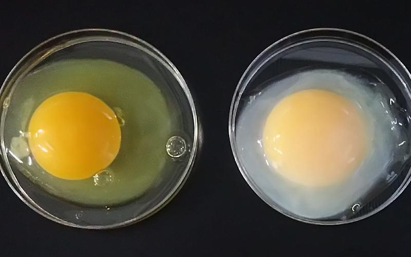 A standard egg (left) is shown next to a multi-million pound 'golden egg' - Telegraph