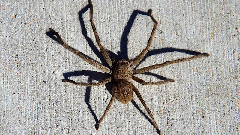 Australian police scramble to screams of murder - find man killing spider