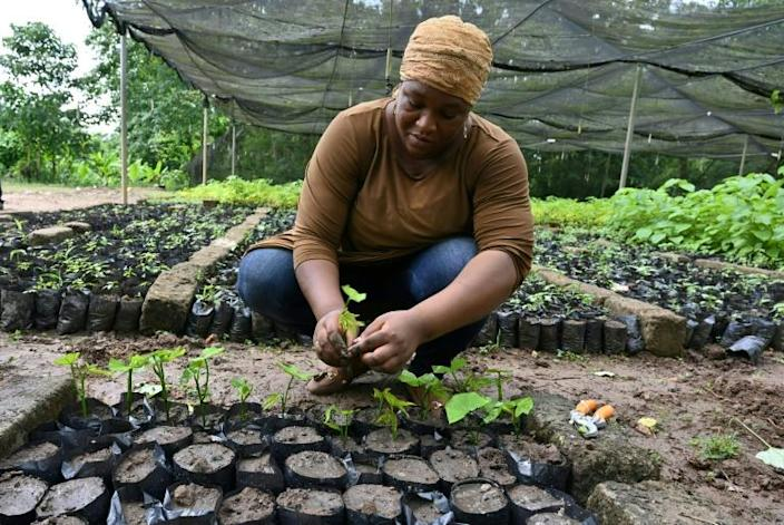 A woman prepares cuttings for reforestation