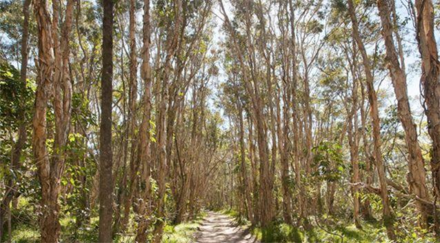 The house is surrounded by bushland. Source: Dowling Neylan Real Estate
