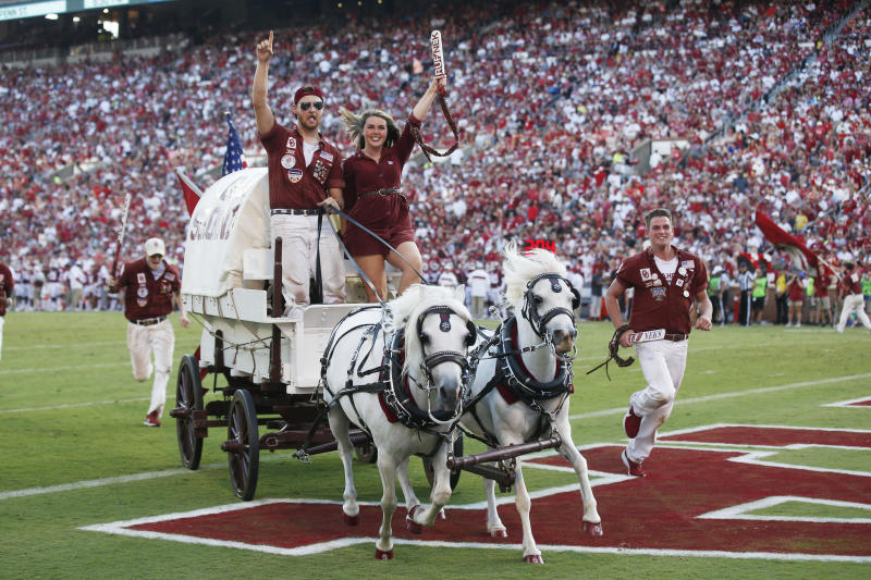 Ponies Boomer and Sooner pull the Sooner Schooner to celebrate a touchdown/
