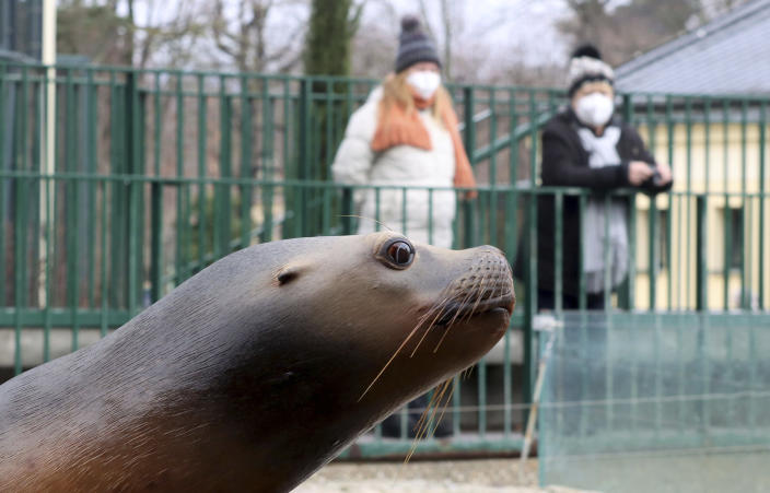 Visitors with a masks observes a seal in an enclosure at the Schoenbrunn Zoo in Vienna, Austria, Monday, Feb. 8, 2021. Visitors can visit the zoo again after 97 days lock down. The Austrian government has moved to restrict freedom of movement for people, in an effort to slow the onset of the COVID-19 coronavirus. (AP Photo/Ronald Zak)